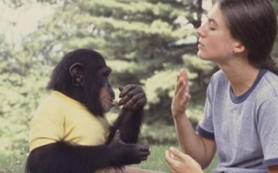 Kan jouw huisdier ook gebaren(taal)?